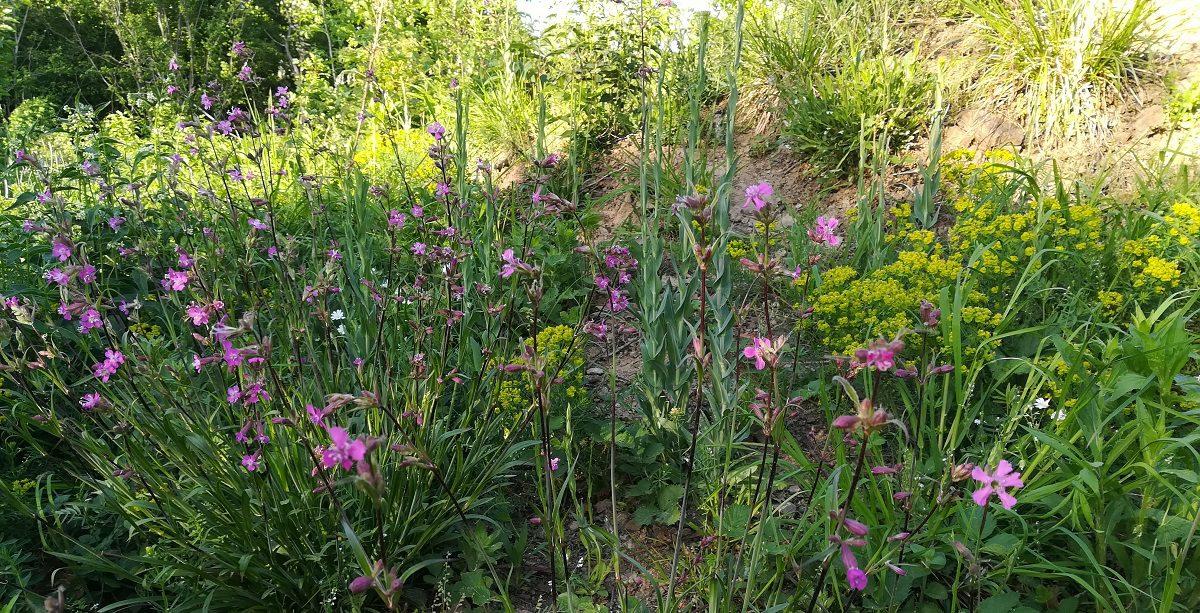 Schön, nützlich und äußerst bequem: Wildstauden jetzt pflanzen!