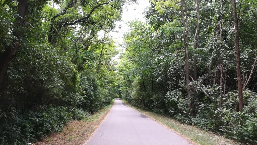 Wenig spektakulär der erste Teil: schattiger Weg durch den Wald
