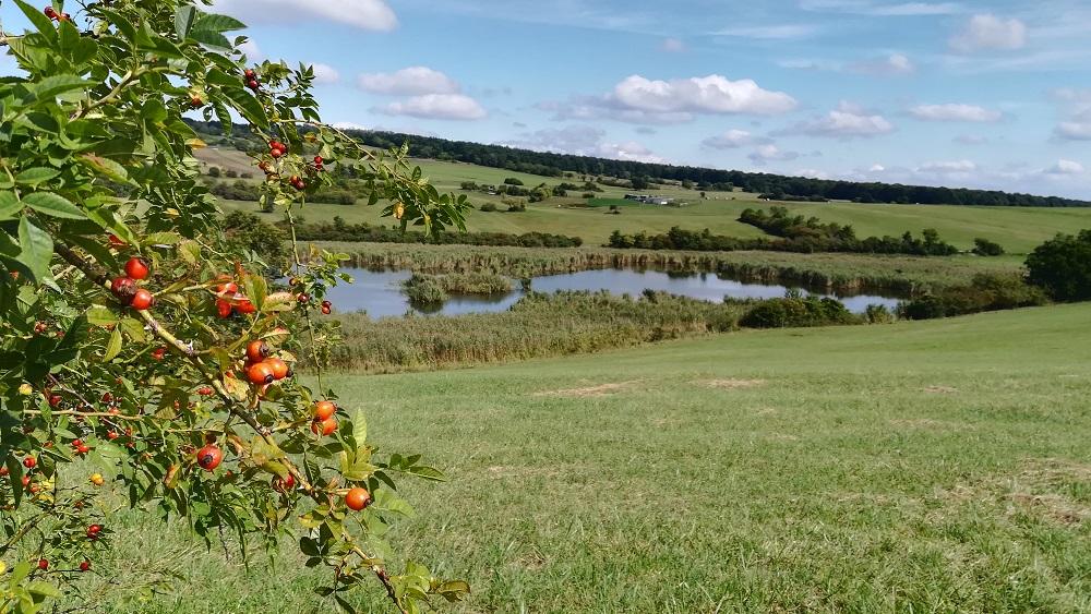 Rohrbacher Kogel und Teichwiesen: sanfte Hügel, Wiesen, Wasser