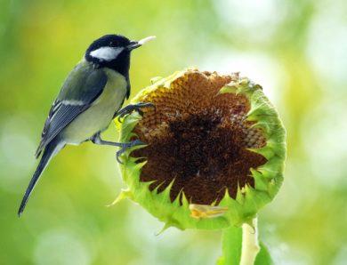 Vogelfrei. Fütterst du schon?