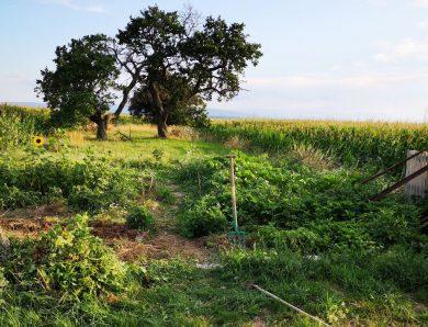 Projekt: Wildgarten Hornstein